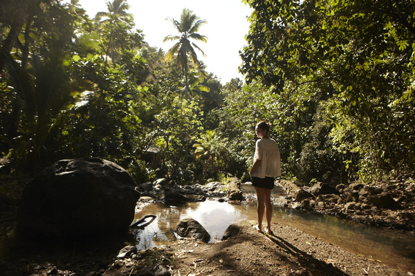 Foraging in the rainforest of St Lucia