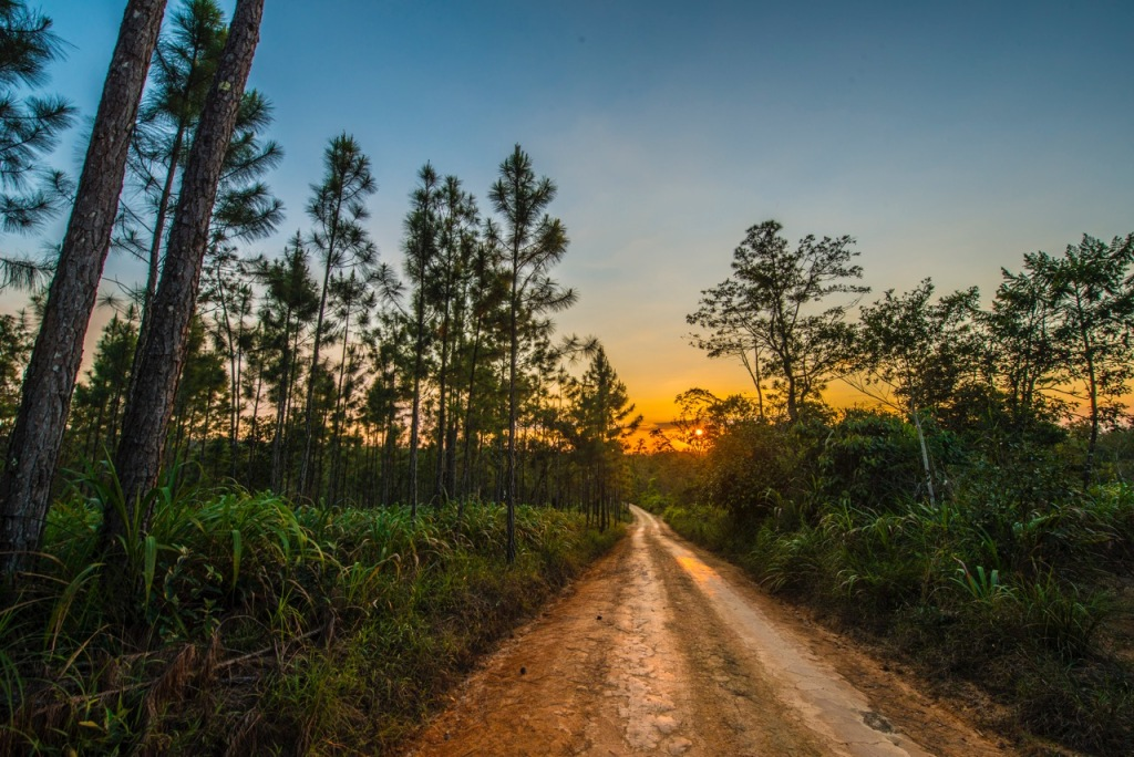 Sunset journey into the Costa Rican rainforest and the cocoa bean estates